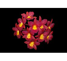 Red Orchids Natural Photographic Print