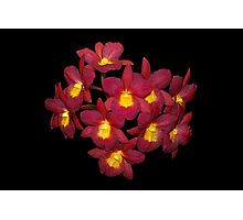Red Orchids Painted Photographic Print