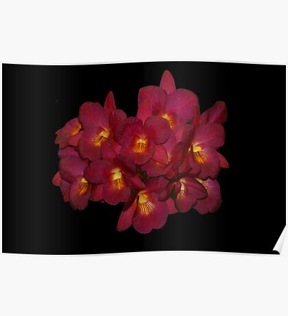 Red Orchids Natural 2 Poster