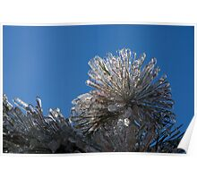 Toronto Ice Storm 2013 - Pine Needle Flower Poster