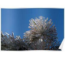 Toronto Ice Storm 2013 - Pine Needle Flower Poster