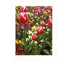 Blooms Art Print
