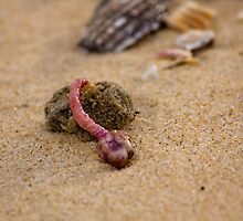 Alien Creature - Beachcomber Series by reflector