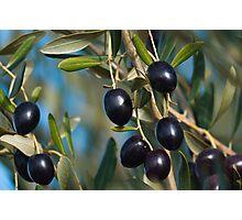 Fresh organic Olives. Photographic Print
