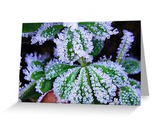 Frost on a beautiful, green leaf Greeting Card