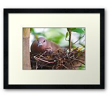 In My Nest - Water color look Framed Print