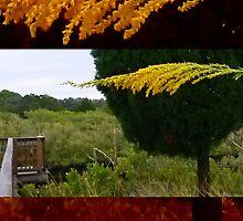 Goldenrod, Eagle Point Park, New Port Richey, FL by Ellen Turner