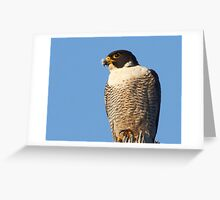 Peregrine Falcon ~ Natures Speed Machine  Greeting Card