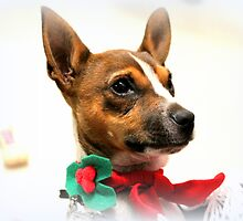 Christmas Kudlz by Evita