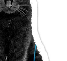 My black cat is a pokemon ! Sticker