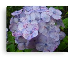 Early Summer Blue Canvas Print