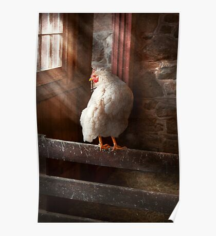 Animal - Chicken - Lost in thought Poster
