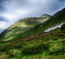Alpine meadow landscape color fine art photography - La su sulle montagne by visionitaliane