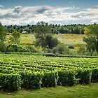 Afternoon in a Vineyard by Johanne Brunet