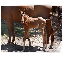 The New Foal Poster