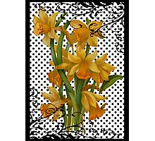 Antique Daffodils on Black Polka Dots Photographic Print