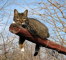 Mishu Just Hanging Around by Dennis Melling