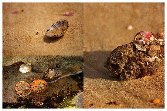Seaside Trinkets by reflector
