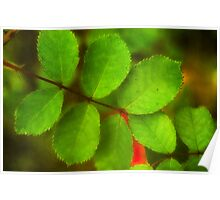 Red rose leaves Poster