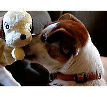 Dog & Toy Photographic Print