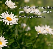 Inspirational - Daisy - Colossians 3-14 by Mike  Savad