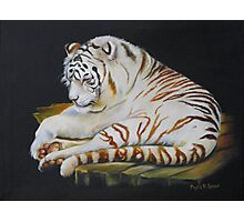 White Tiger Sleeping Photographic Print