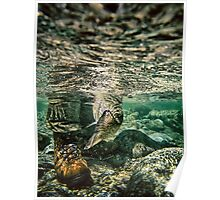 Fly fishing underwater rainbow trout tail - underwater fine art color - Presa all'Amo - Underwater Rainbow Poster