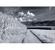 Corn fields and mountains Alpine rural landscape on black and white infrared film fine art wall art - I campi di casa Photographic Print