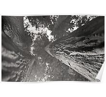 Redwood sequoia bark perspective - giant tree - black and white film - I giganti gemelli Poster