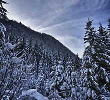 Winter scene snow in the forests of the Alps - color photo - Foresta di Neve by visionitaliane