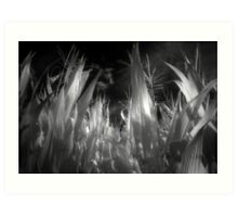 Corn leaves and plants on infrared film rural black and white fine art photography - Verso Casa Art Print