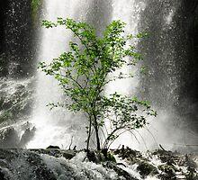 Tree and waterfall naturalistic wall art - L'albero verde by visionitaliane