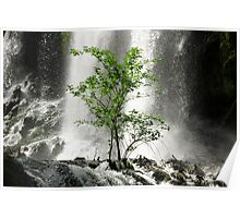 Tree and waterfall naturalistic wall art - L'albero verde Poster