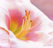 Summer's Gentle Beauty by Anita Pollak