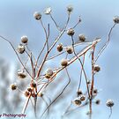 Signs of Winter by BarbL