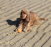 Beach Dog With Her Ball by aussiebushstick