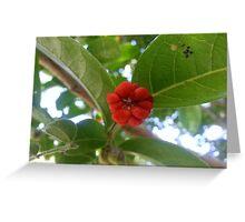 Jen's Garden - Orange Plant Greeting Card