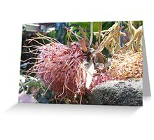 Jen's Garden - Brownish Pink Grevillea Greeting Card