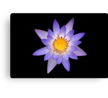 Water Lily Pastel Colors Canvas Print