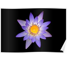 Water Lily Pastel Colors Poster