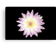 Water Lily Pink Color Canvas Print