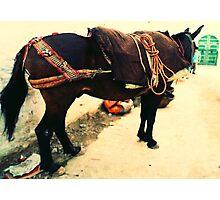 Moroccan Donkey Photographic Print