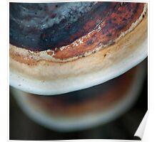 Mushrooms V. Poster