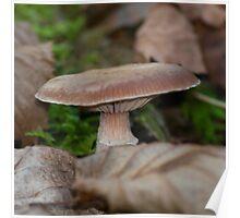 Hidden Mushroom Poster