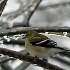 Goldfinch on Ice by Martha Medford