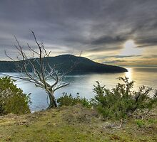 Color Fine art naturalistic HDR sunset bay tree on Puget Sound - Fuori dal Tempo by visionitaliane