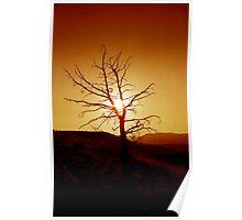 Tree silhouette against sunset in the desert artistic - Fire Sky Poster