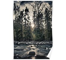 River in the forest at sunset fine art color wall art from the Great Pacific Northwest - Il silenzio del bosco Poster