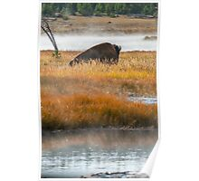 Wildlife wall art buffalo bison thunderbeast Yellowstone park landscape - Riposando Poster