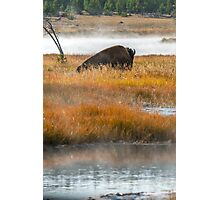 Wildlife wall art buffalo bison thunderbeast Yellowstone park landscape - Riposando Photographic Print